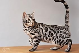 Lagertha of DOKOcats